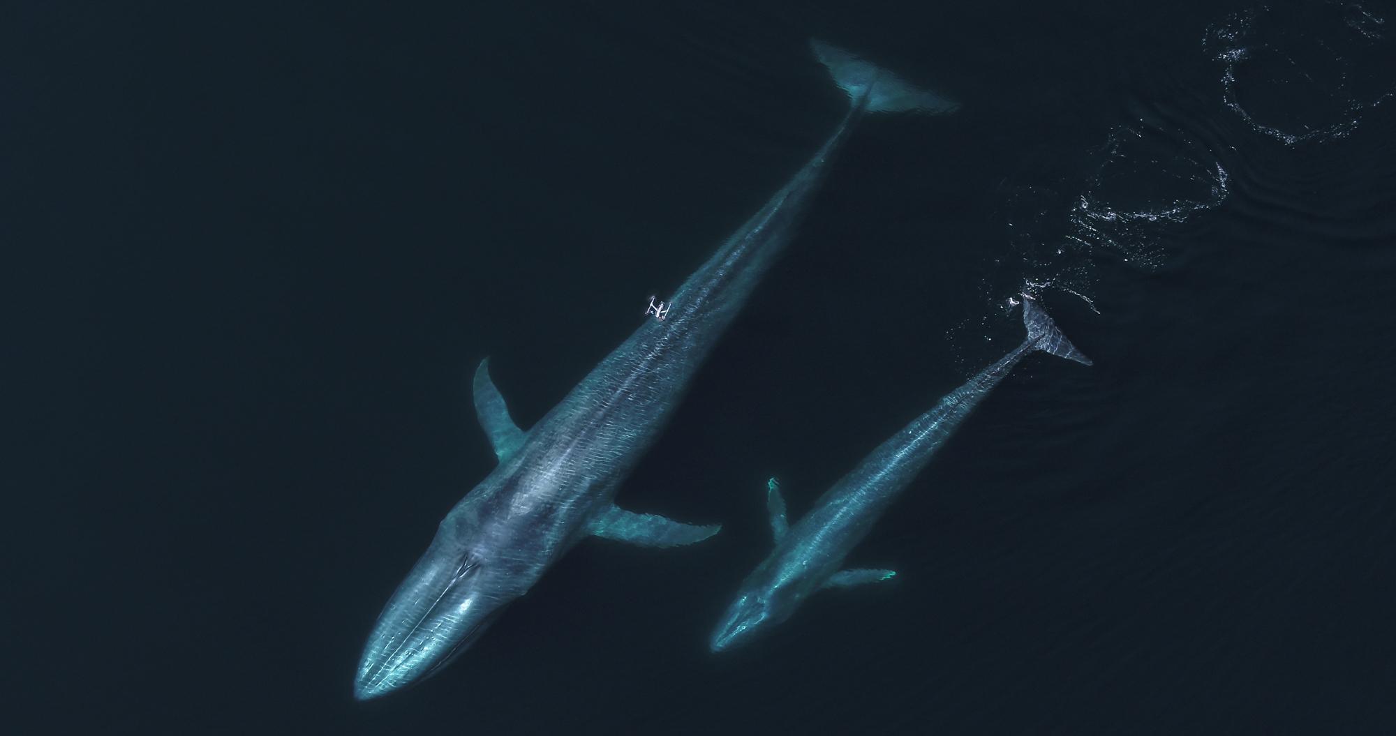 Image for Ocean Alliance Digitalisation Project